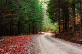 Path of pine and green fir forest — Stock Photo