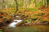 Mountain river in late Autumn — 图库照片
