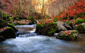 Mountain river in late Autumn — Stock fotografie