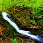 Waterfall in summer deep inside wooden path. — Stock Photo #39070959