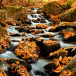 River with leaves in Autumn colors — Stock Photo