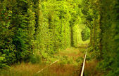 """Natural tunnel of """"love"""" formed by trees in Romania. — Stock Photo"""