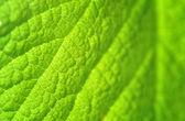 Texture feuille verte — Foto Stock