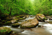 Mountain river flowing fast in a cloudy morning. — Stock Photo