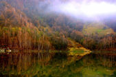 Lake and forest reflection scene — Stock Photo
