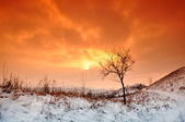 Winter sunset with tree in the snow and orange sky. — Stock Photo