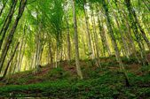 Forest in sunset light. — Stock Photo