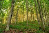 Forest in sunset light. — Fotografia Stock