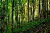 Forêt dans la lumière du coucher du soleil. — Photo
