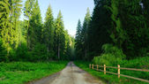 Road in forest in the summer — Stock Photo