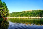 Lake in summer. — Stock Photo
