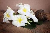White plumeria flower on wooden — Stock Photo