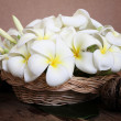 Stock Photo: Basket of white plumeria