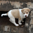 Little dog in concrete hole — Stock Photo #39414119