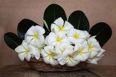 Still life of basket white plumaria flower on wooden — Stock Photo