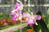 Pink flower orchid — Stock Photo