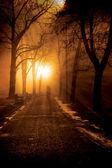 Foggy lonely night — Stock Photo