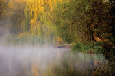 Morning by a river — Stockfoto