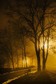 Foggy night in park — Stock Photo