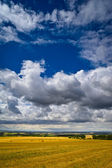 Lato pole — Zdjęcie stockowe