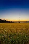Field at dusk — Foto Stock