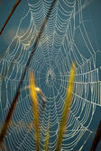 Spider net — Stock Photo