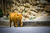 Cat in Provence — 图库照片