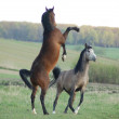 Horses Fight 2 — Stock Photo