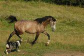 Horse Galopem — Stock Photo