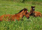 Horses Młode W słońcu — Stock Photo