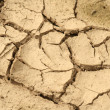 Dry earth — Stockfoto
