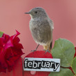 Stock Photo: Bird perched on February decorated fence