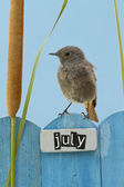 Bird perched on a July decorated fence — Stock Photo