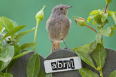 Bird perched on a April decorated fence — Stock Photo