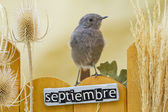 Bird perched on a September decorated fence — Stock Photo