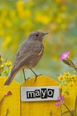 Bird perched on a May decorated fence — Stockfoto