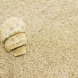 Fossil mollusk in sand — Stock Photo #39281493