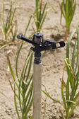 Water sprinkler in onion field — Stock Photo