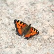 Stock Photo: Small Tortoiseshell butterfly