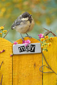 Bird perched on  May fence — Stock Photo