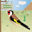 European Goldfinch — Stock Vector