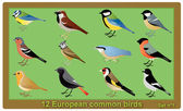 European common birds — Stock Vector