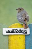 Bird perched on a fence decorated with the word ornithology — Photo
