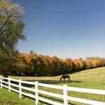 Постер, плакат: Horses pasture and white fence
