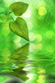 Nature reflections — Stock Photo