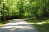 Country road through the trees — Stock Photo