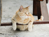 Cat is chilling under a chair — Stock Photo