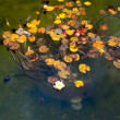 Water lily — Stock Photo #39194941