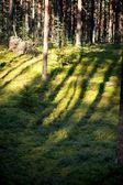 Lesní rostliny — Stock fotografie