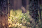 Forest plants — Stock Photo